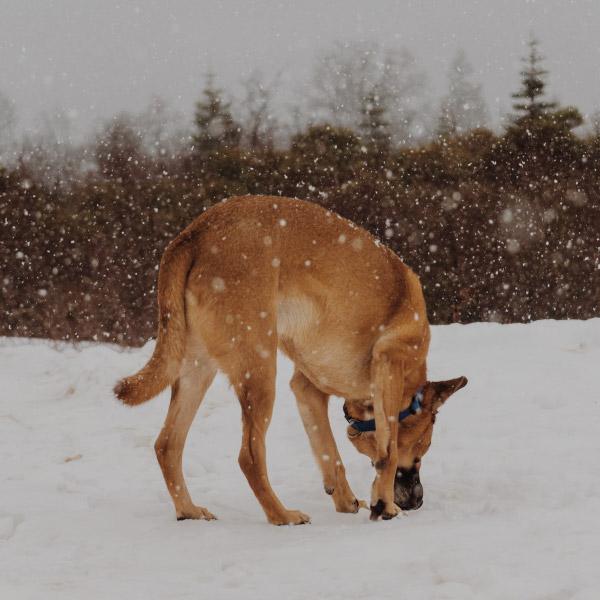 hond-snuffel-01